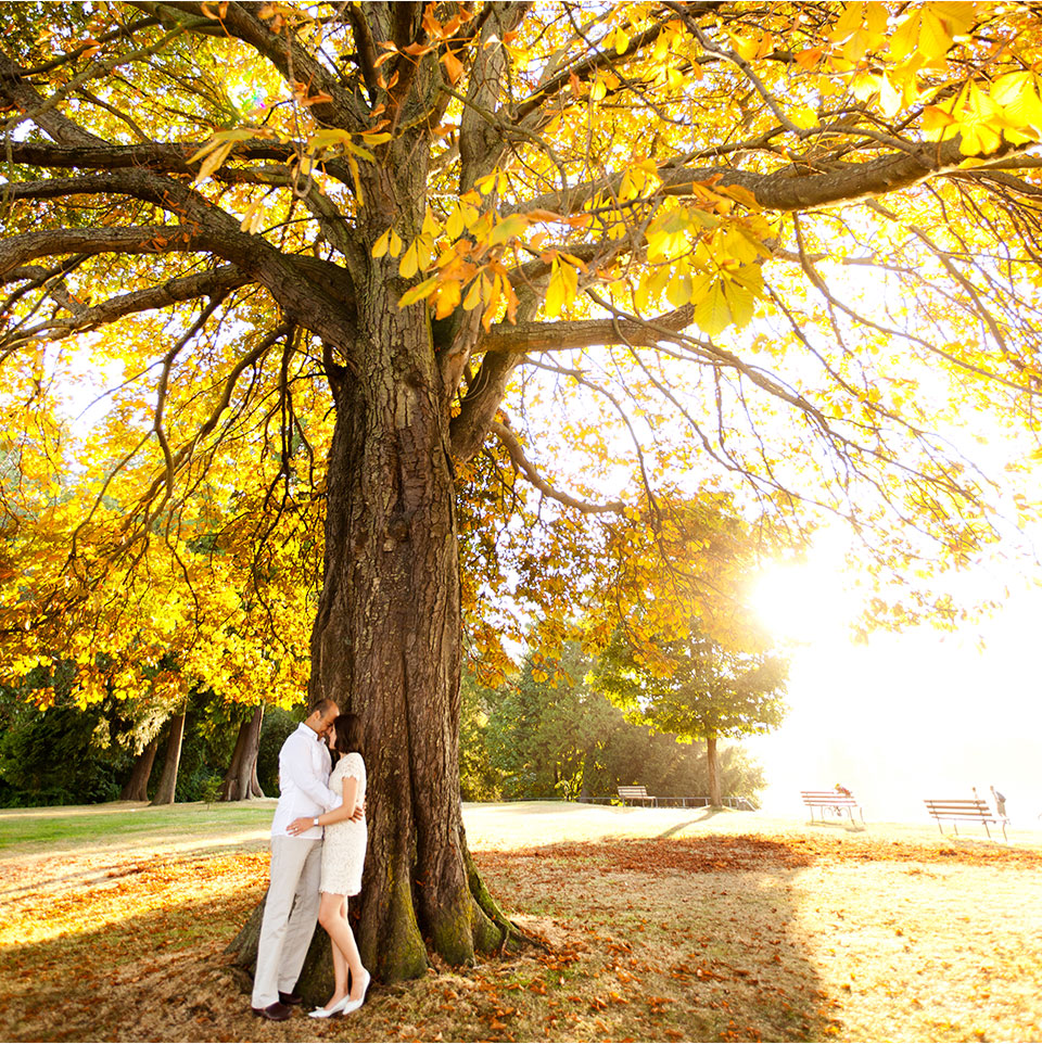 Stanley Park engagement shoot: couple under tree in Stanley Park. Leaves changing colour fall autumn